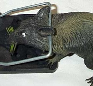 Mouse and Rat Traps