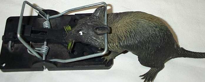 Snap-E Rat Trap