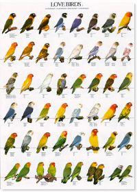 Lovebirds Poster #2