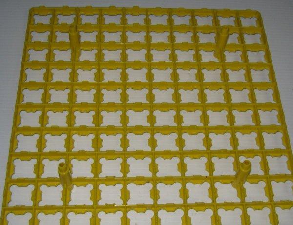 Quail egg tray 100