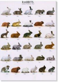 Rabbits Poster #1