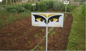 Bird Scarer in Garden
