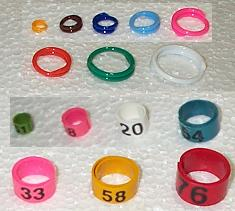 Leg Rings and Bandettes